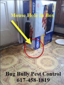 mouse hole in box bug bully pest control