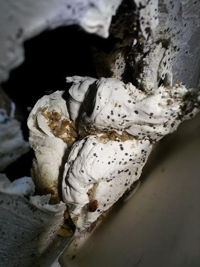 Do Bed Bugs Nest In Walls